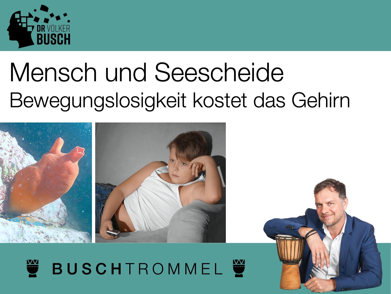 Buschtrommel: Mensch und Seescheide - Dr. Volker Busch